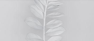 calm white.jpg