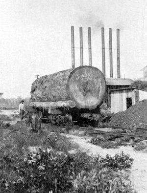 Sawmill Centralia Log.jpg