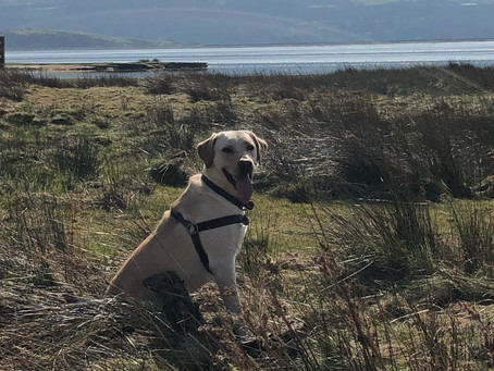 Top tips for taking your dog to the crag