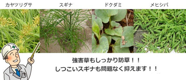 kyougaisou_edited.jpg