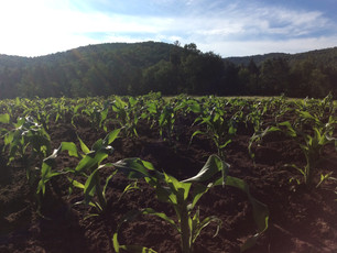 Knee High By the Fourth of July!