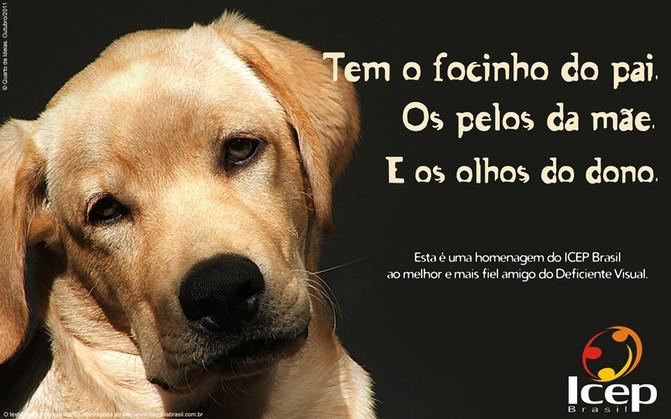 Cão-guia amigo fiel