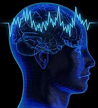AO scan head image.webp