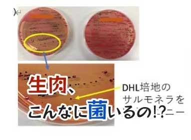 授業紹介:食品衛生学実習【食の安全07】