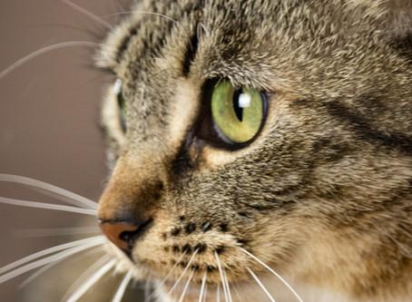 Kitty Godmother Test Post 20191005