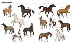 Big Horses Little Horses TEXTPAGES-12