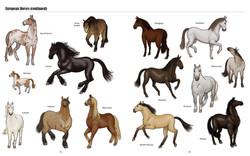 Big Horses Little Horses TEXTPAGES-8