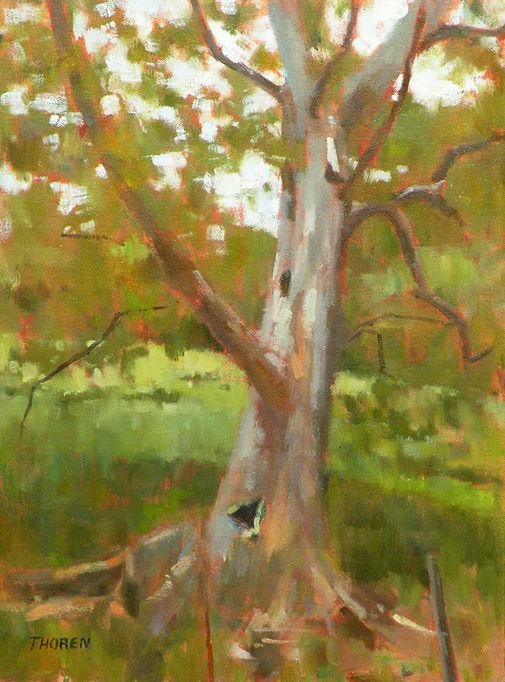 Lone Sycamore by Robert Thoren