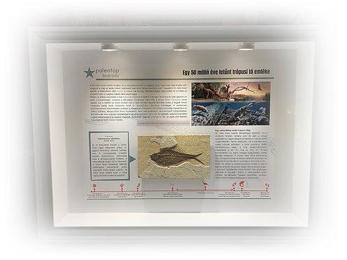 Memory from a 50 million years old lake - Diplomystus dentatus fossil