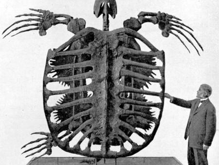 A nap képe: a valaha élt legnagyobb teknős