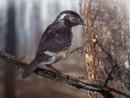 A madarak körében mindeddig ismeretlen végtagstruktúrát rejtett a borostyánkő