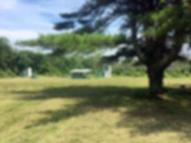fields_with_tree.jpg