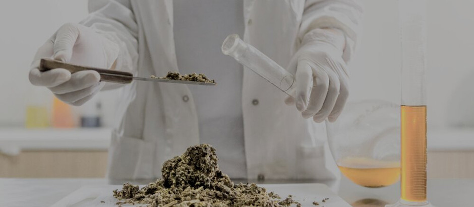 GMP VS ISO 9001 EXPLAINED FOR THE CANNABIS AND HEMP INDUSTRY