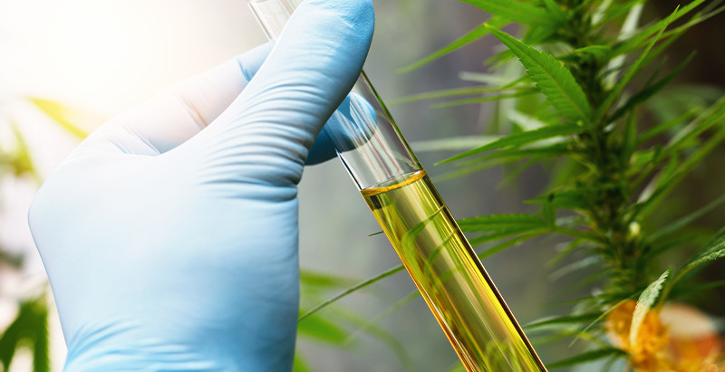 How to perform CBD Extraction Consultations?