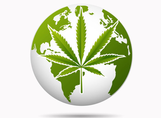 Where in the World is Cannabis and CBD Legal- Answered