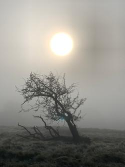 Hawthorn sun