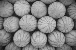 Concrete Melon