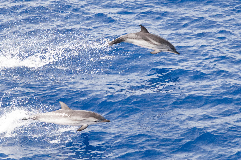 delfiniisoladilinosa