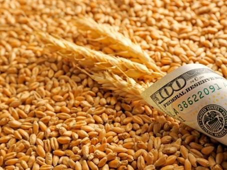 Вице-премьер  Абрамченко поручила доложить о причинах роста цен на пшеницу твердых сортов
