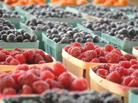 Фермеры Ярославской области выращивают малину, клубнику и жимолость