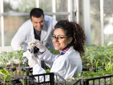 В Дагестане планируют создать Школу агронома