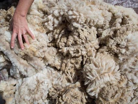 В Забайкалье увеличат господдержку производителей овечьей шерсти