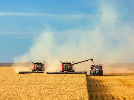 В Краснодарском крае стартовала уборка пшеницы