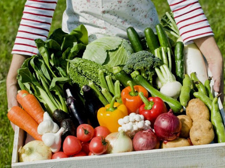 В Татарстане, благодаря точному выполнению агротехнологий, ожидается хороший урожай