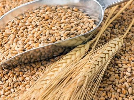 Из пшеницы планируют делать биопластик