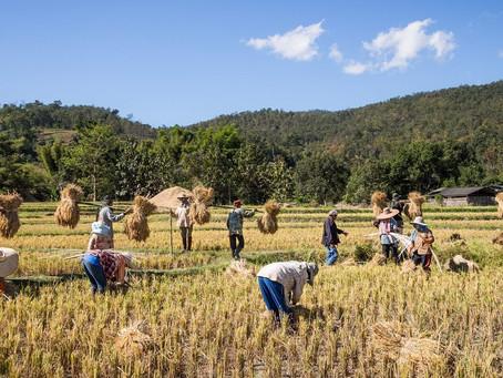 У будущих агрономов Бурятии появилась возможность пройти оплачиваемую практику с трудоустройством