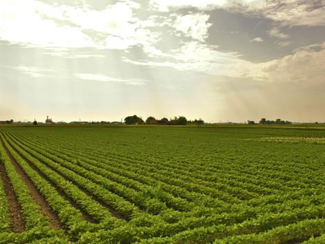 Узбекистан хочет выращивать в РФ агрокультуры на землях до 1 млн га