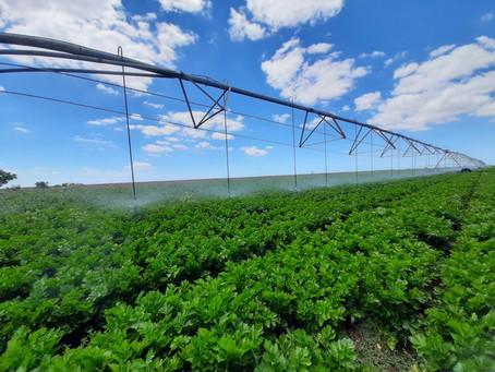 На господдержку мелиорации претендует 36 крымских сельхозпредприятий