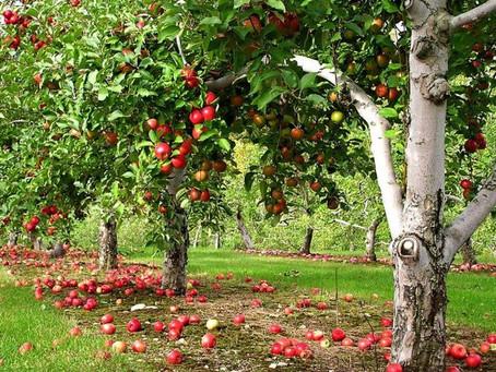 В Нижегородской области около 30 млн руб. направят на развитие садоводства