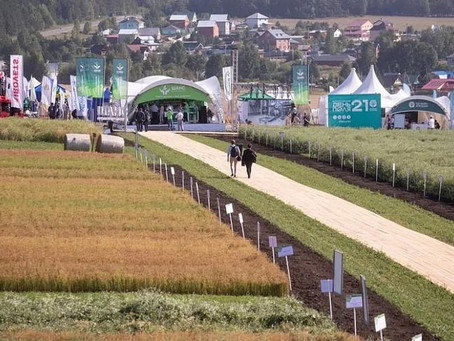 Впервые в России площадь под масличными культурами достигла 16,5 млн га