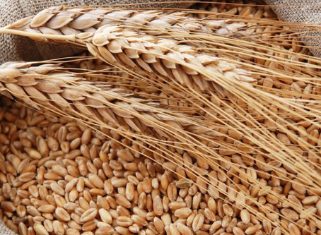 Урожай зерна в Башкортостане вырос на четверть по сравнению с прошлым годом