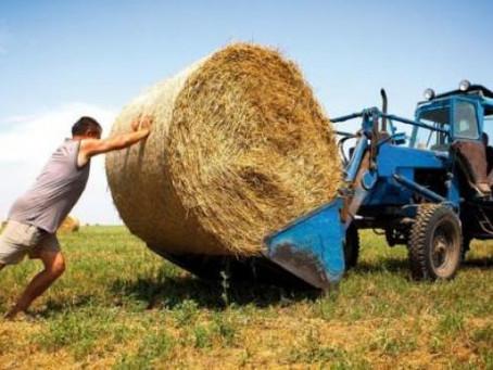 В Ленинградской области активно поддерживают фермеров