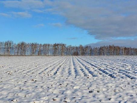 Рязанские аграрии готовы начать весенний сев 10 апреля