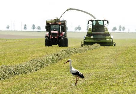Аграрии Нижегородской области перевыполнили план по заготовке кормов для сельхозживотных