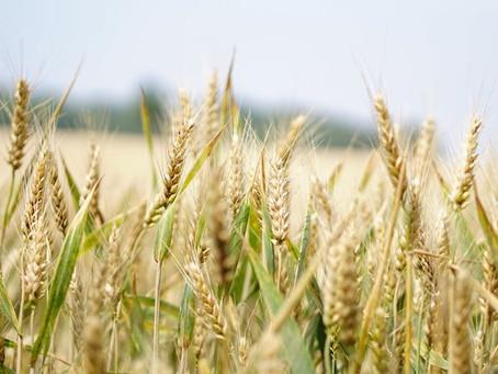 В Татарстане планируют построить семенной завод мощностью 30 тыс. тонн в год