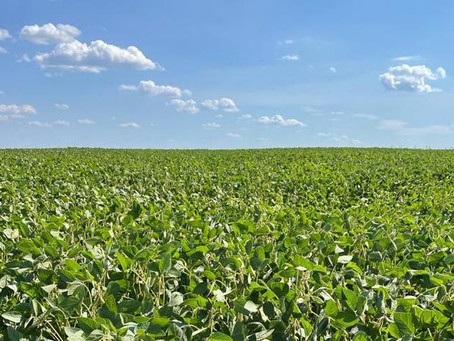 Тамбовская область занимает 4-е место в России по страхованию урожая на условиях господдержки