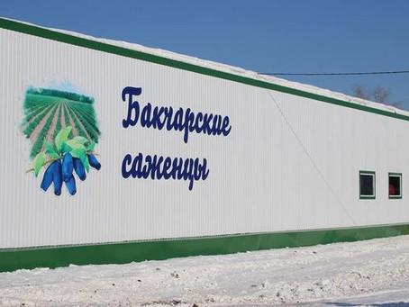 Как устроено северное производство ягод и садоводство в Томской области