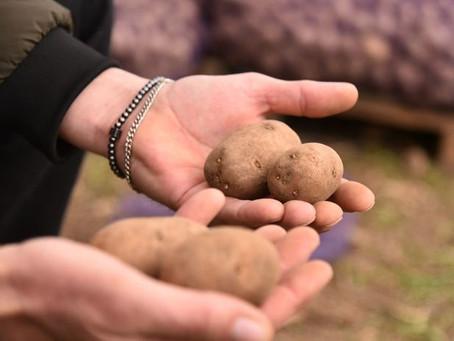 Ставропольским аграриям предстоит засеять овощными культурами порядка 11 тысяч га
