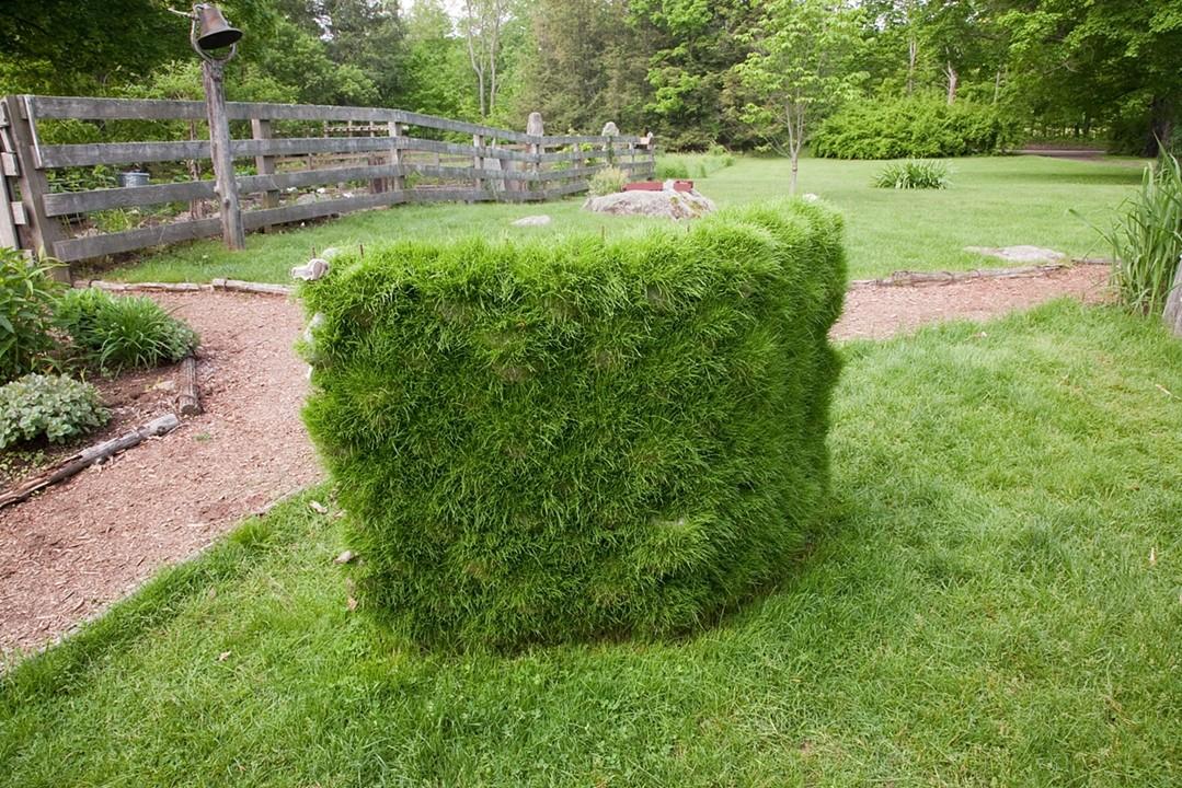 Grass Wall 2009