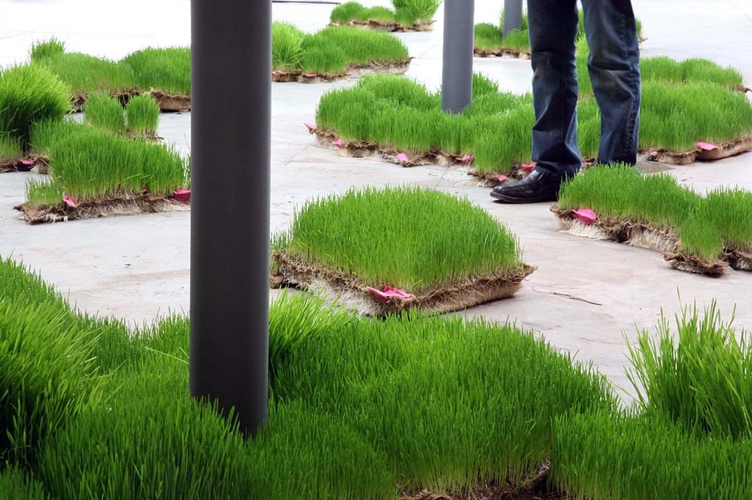 Portable Wheat Field (mature) 2009