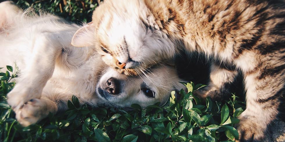 LIEGE Communication Animale / Cours de Base  M1+M2+Communiquer avec son propre animal