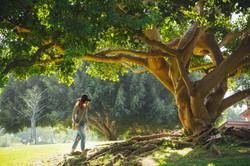 arbre zen