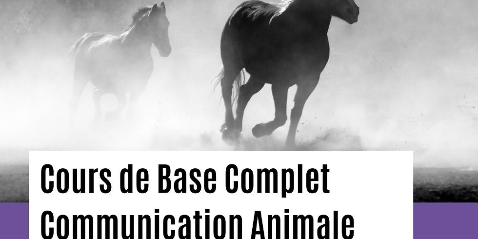 LOT Communication Animale / Cours de Base