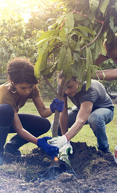 Little Free Trees planting trees for musical streams indigo daydream musical group.jpg