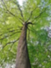 Little Free Tree 1001 instruments.jpg