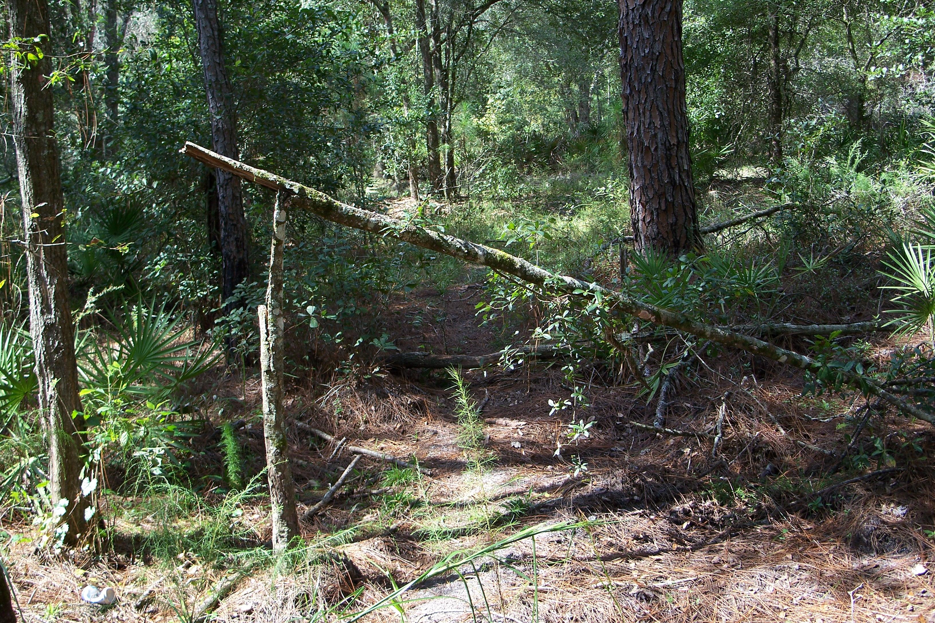 Green Swamp tree break 2005